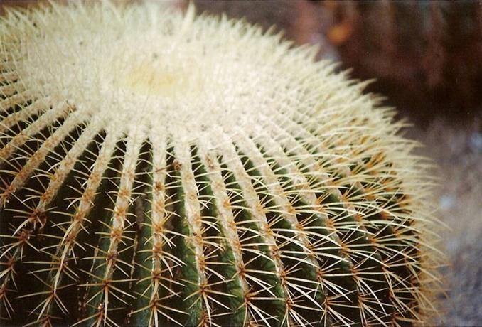 http://luciadolci.altervista.org/files/gimgs/25_jardin10700_v2.jpg