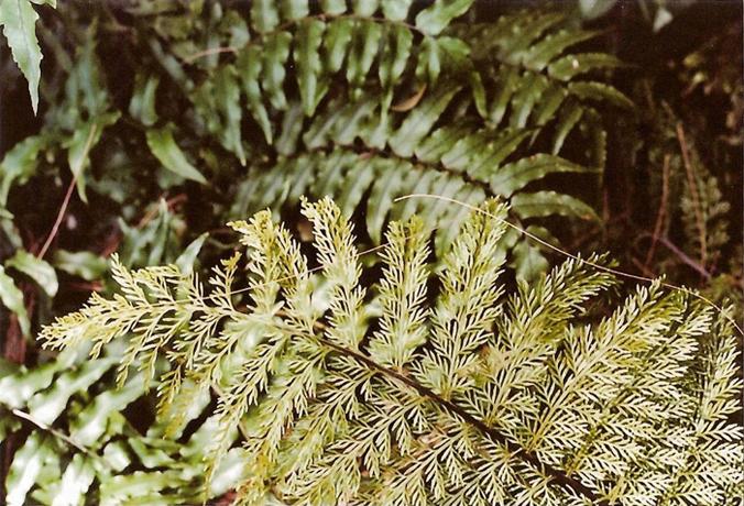 http://luciadolci.altervista.org/files/gimgs/25_jardin11700.jpg