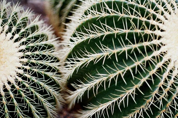 http://luciadolci.altervista.org/files/gimgs/25_jardin14460.jpg
