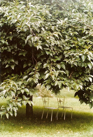 http://luciadolci.altervista.org/files/gimgs/25_jardin7700.jpg