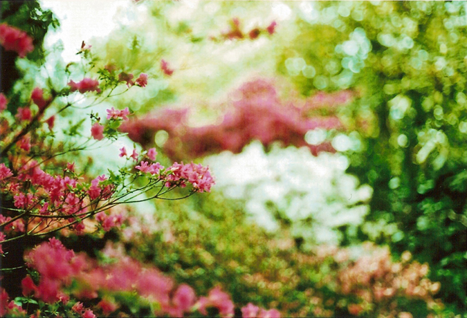 http://luciadolci.altervista.org/files/gimgs/25_jardin8700_v2.jpg